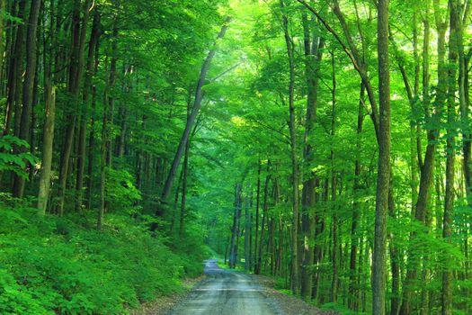 Photo free road, ravine, greenery