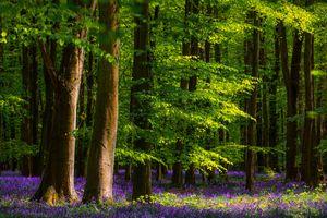 Таинственный лес · бесплатное фото