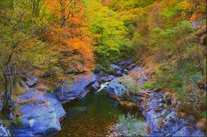 Бесплатные фото осень,лес,деревья,река,скалы,осенние краски,природа