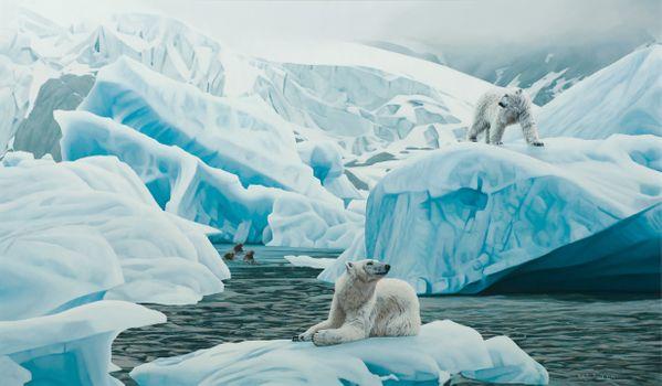 Заставки льдин, северный медведь, северный полюс