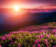 Фото бесплатно закат, луг, цветы