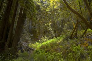 Фото бесплатно лес, пейзаж, растения