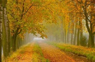 Бесплатные фото осень,деревья,парк,лес,туман,тропинка,канава