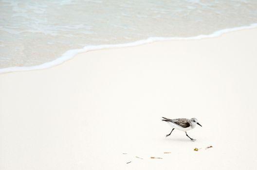 Фото бесплатно пляж, море, белый