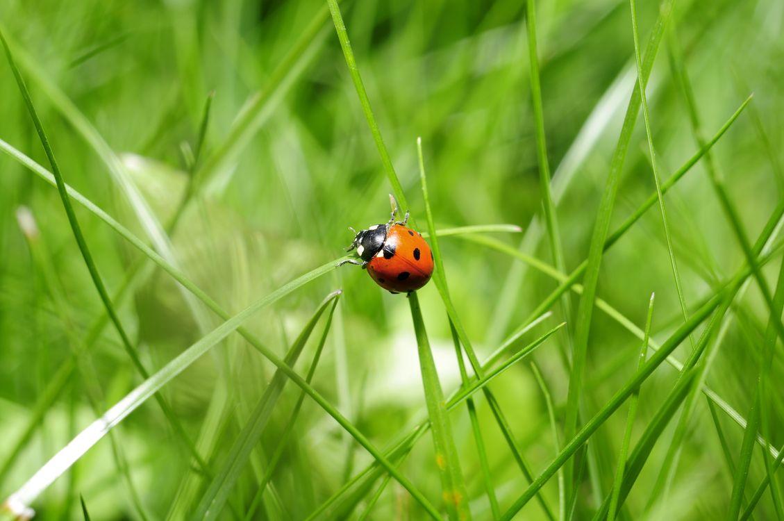 Фото бесплатно трава, насекомое, зелёный - на рабочий стол
