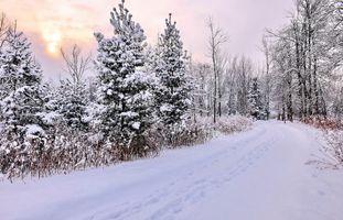 Заставки зима,снег,деревья,сугробы,лес,тропинка,следы