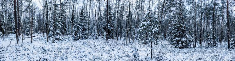 Фото бесплатно зимний лес, панорама, Литва, снег деревья, природа, пейзаж