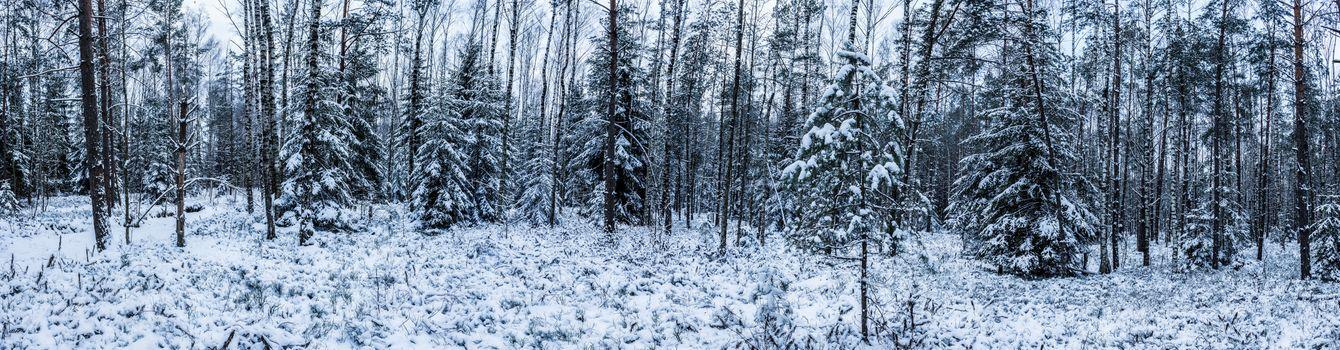 Фото бесплатно зимний лес, панорама, Литва