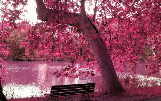 Фото бесплатно скамейка, озеро, пейзажи