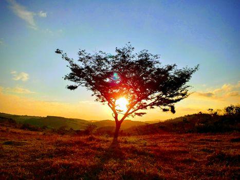 Заставки дерево,небо,экосистемный,восход,утро,поле,солнечный лучик,саванна,послесвечение,солнце,атмосфера,горизонт