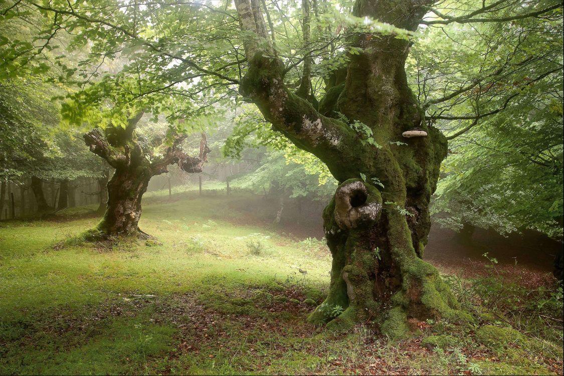 необычные фото леса легенда совсем редких