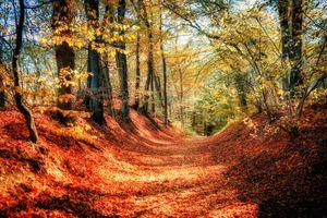 Заставки пейзаж, картины осени, лес