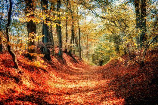 Photo free landscape, paints of autumn, forest