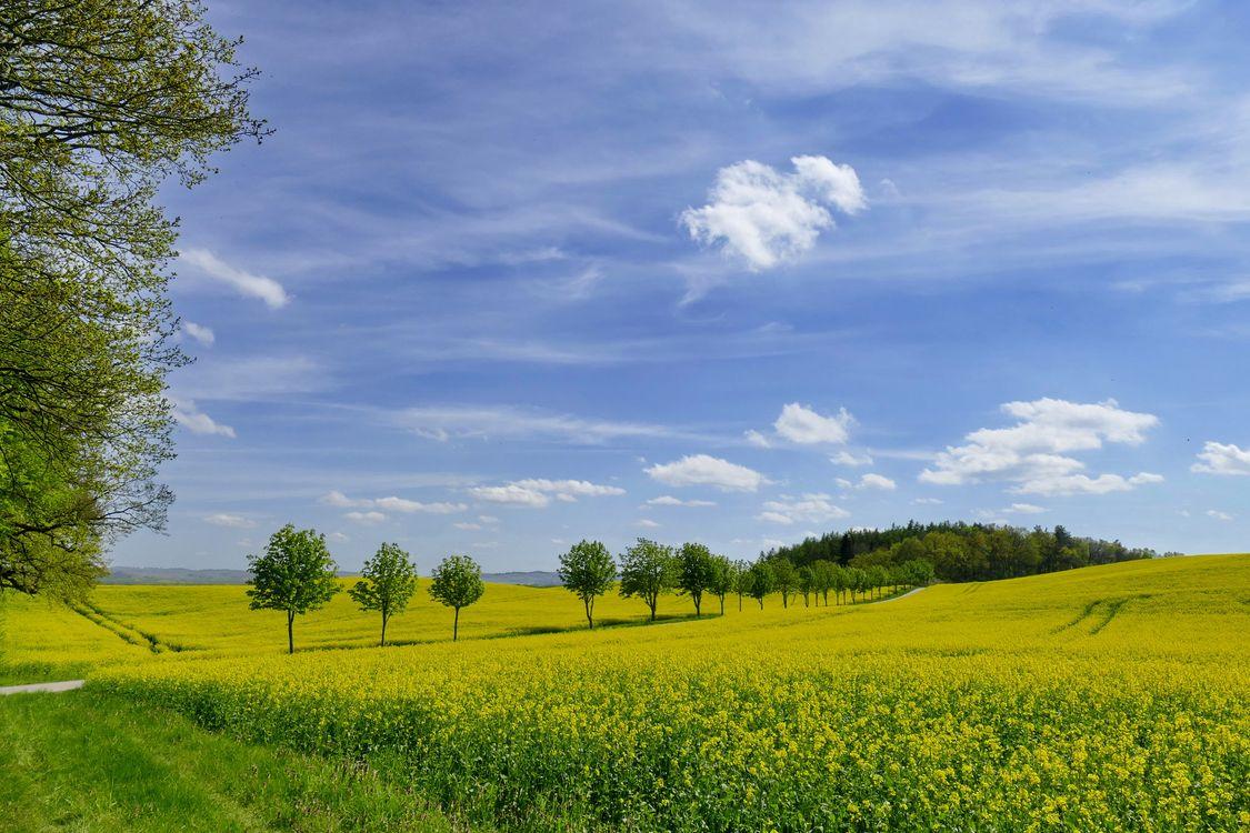 Картинка поле, пейзаж на телефон