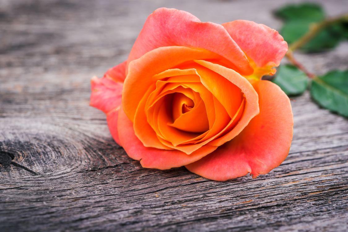 Оранжевая роза на деревянном столе · бесплатное фото