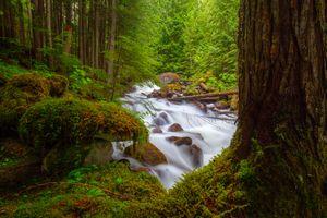 Бесплатные фото Cedar Creek,Ainsworth,British Columbia,Canada,лес,река,камни