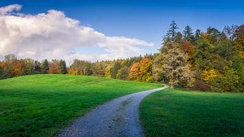 Бесплатные фото поле,дорога,трава,лес,деревья,пейзаж