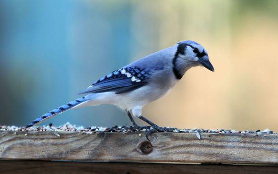 Photo free birds, blue, wildlife
