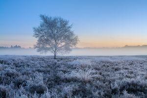 Бесплатные фото закат,поле,дерево,иней,туман,природа,пейзаж