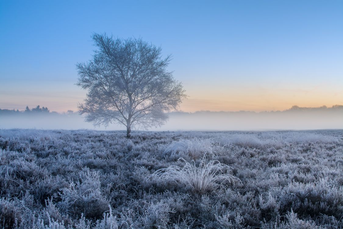 Фото бесплатно закат, поле, дерево, иней, туман, природа, пейзаж, пейзажи