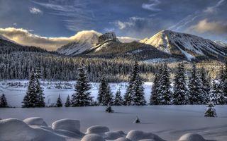Зимние елки на фоне гор · бесплатное фото