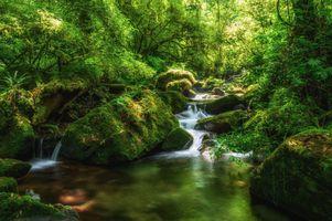 Бесплатные фото лес,деревья,камни,речка,река,водопад,природа