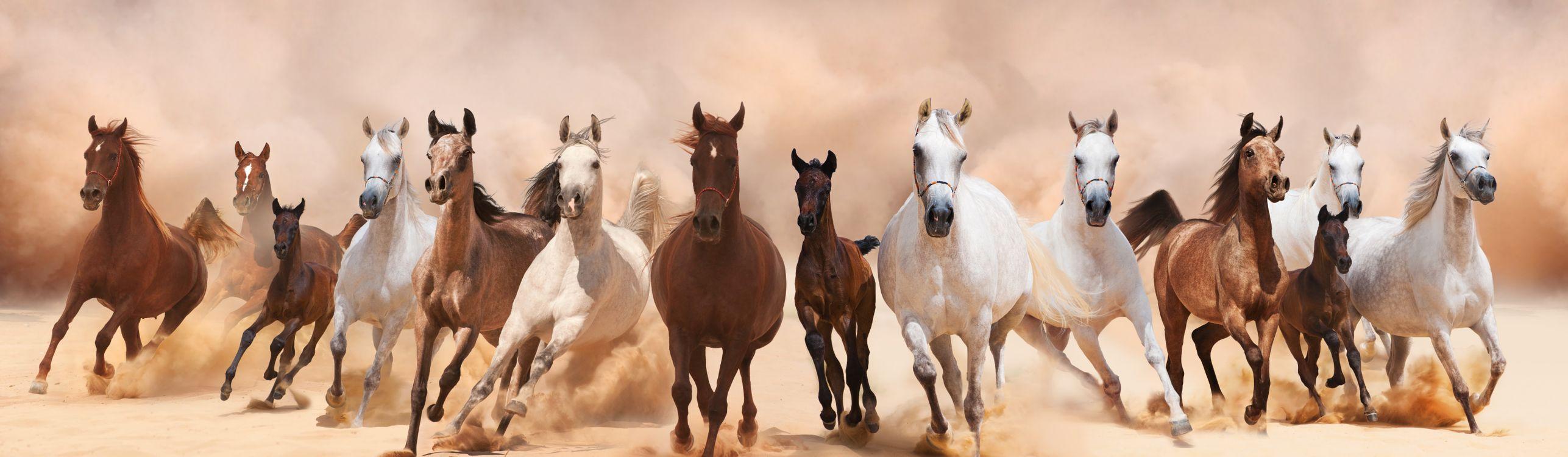 Фото бесплатно лошади, кони, скачки, панорама, животные