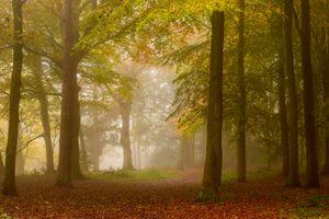 Заставки лес, туман, осенние краски