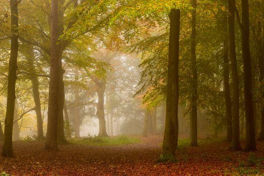 Photo free fog, autumn paints, paints of autumn