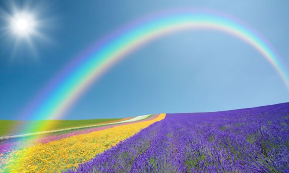 Colorful field with a rainbow