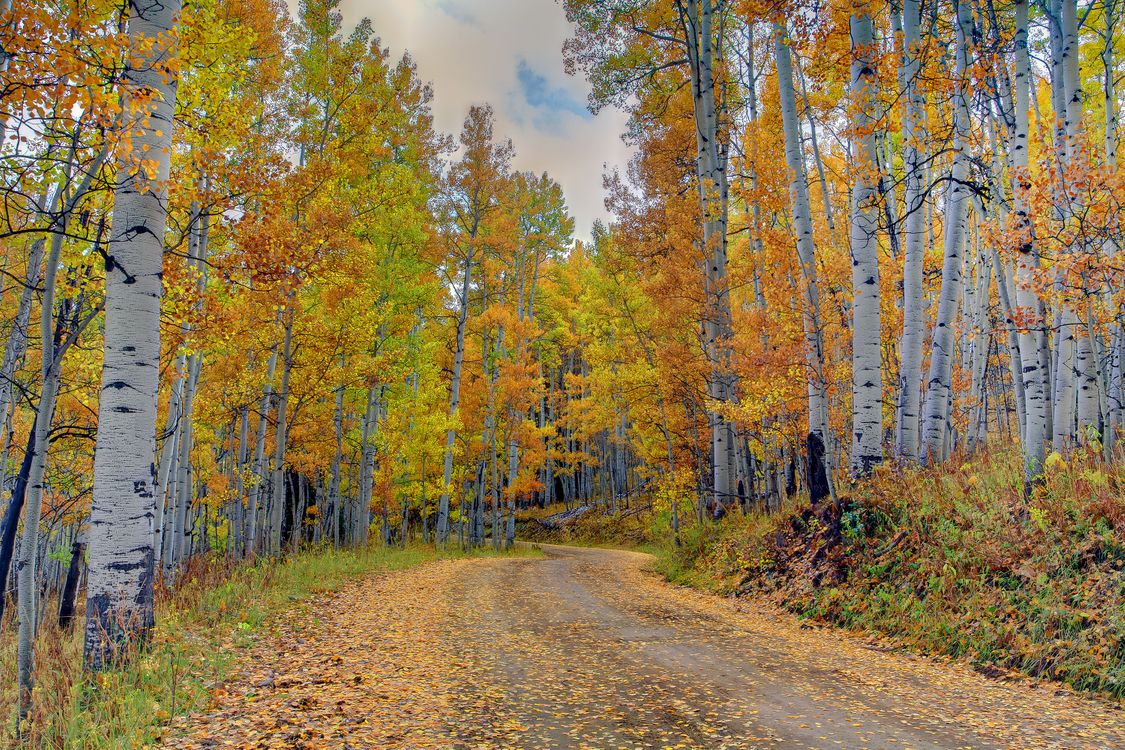 Обои осень, лесная дорога, листопад картинки на телефон