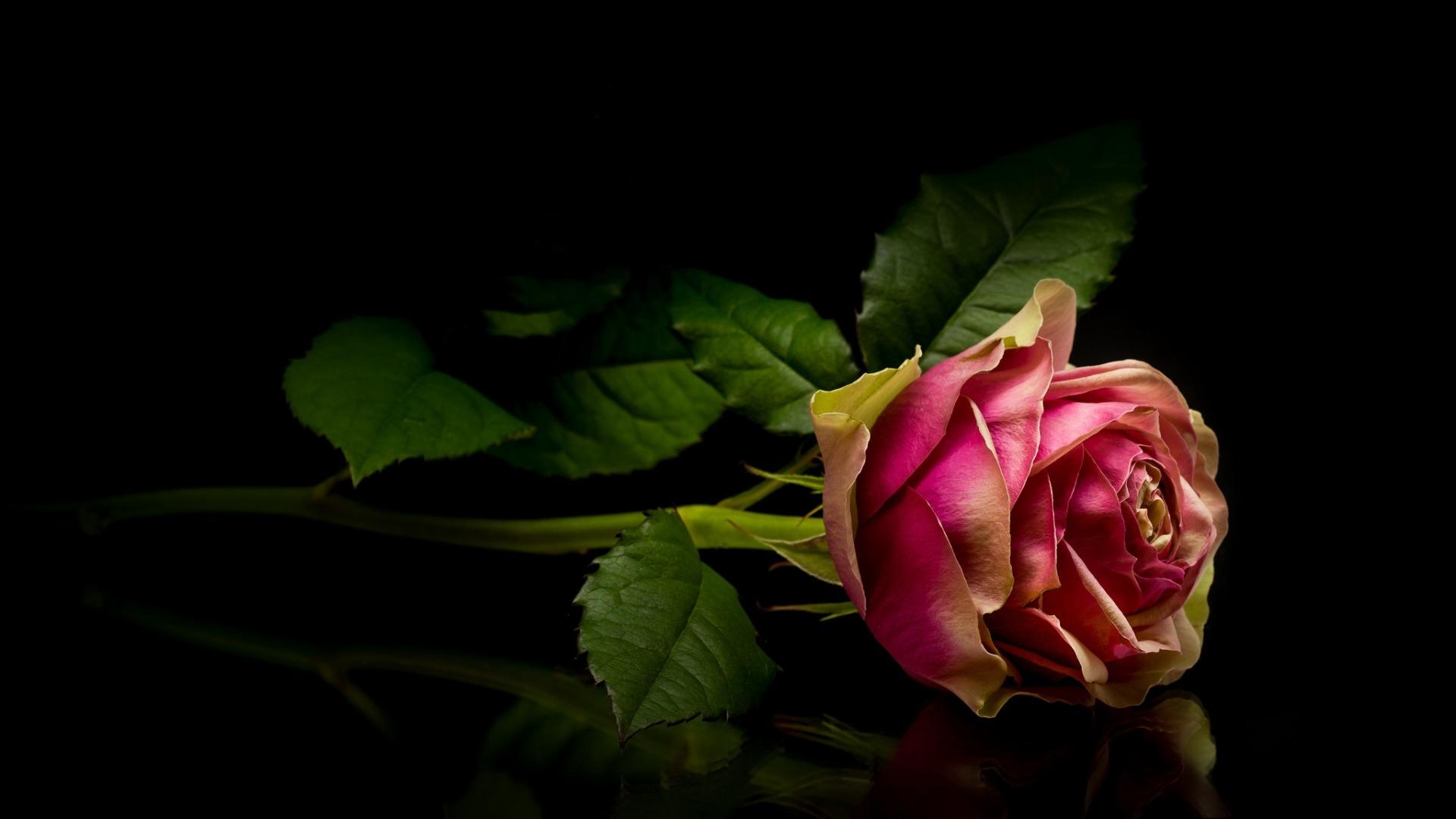 Картинки детские, красивые картинки розы на черном фоне