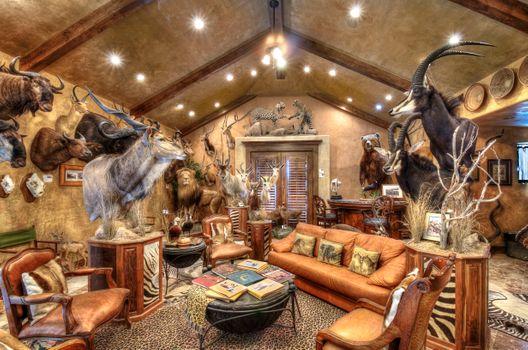 Бесплатные фото Университет штата Аризона в Политехническом кампусе,комната,чучело,диван,освещение,звери,животные,стол,книги,интерьер