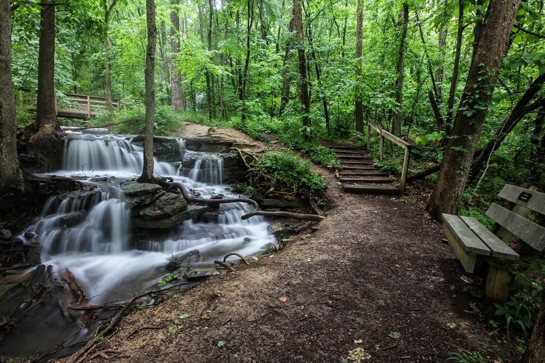 Водопад - лес · бесплатное фото