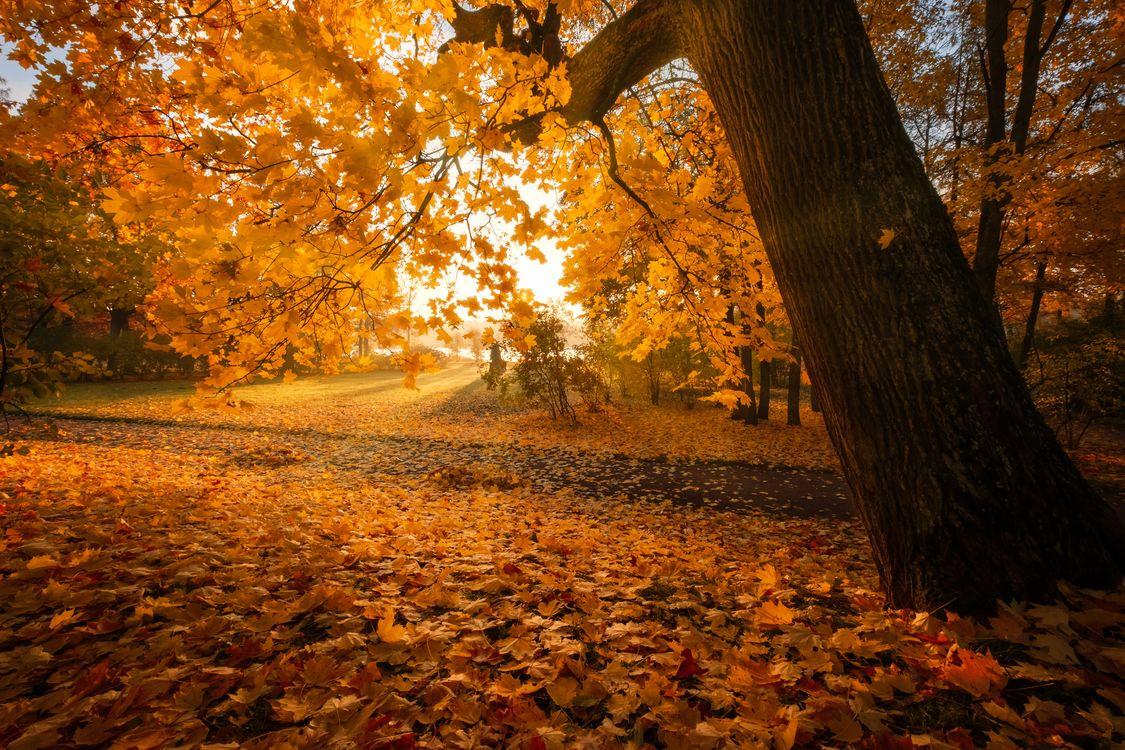Фото бесплатно Золотая осень в Царском селе, Царское село, Санкт-Петербург - на рабочий стол