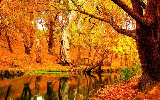 Фото бесплатно осенняя река, листья, осень