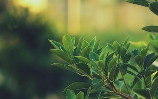 Заставки leaves, green, depth of field