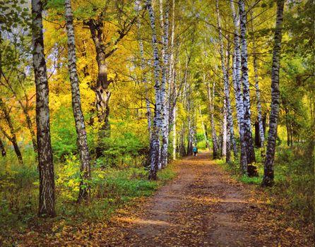 Заставки осень, тропа, дорога