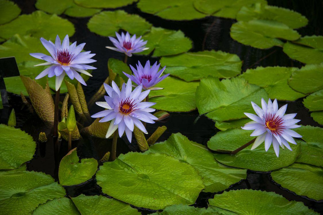Цветы белого цвета · бесплатное фото