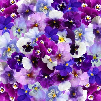 Фото бесплатно цветы, виола, цветочный фон