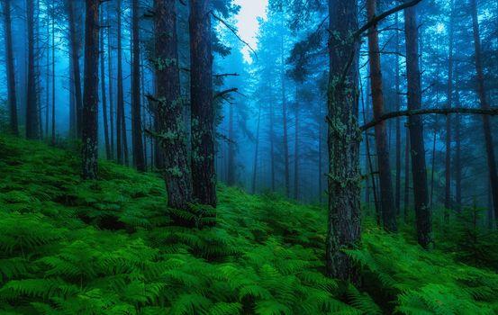Фото бесплатно папоротник, пейзаж, деревья