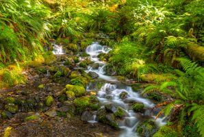 Фото бесплатно растения, Крик, поток