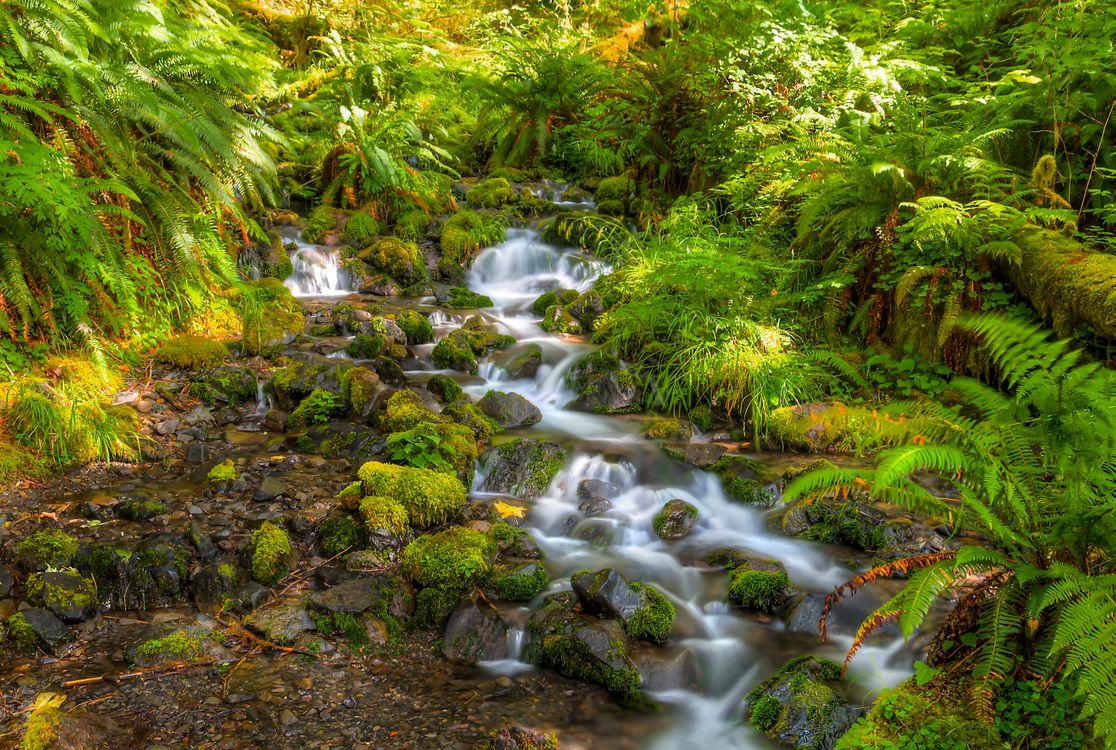 Фото бесплатно речка, ручей, камни, растения, мох, течение, природа, природа