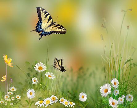 Бесплатные фото ромашки,бабочки,цветы,поле,art