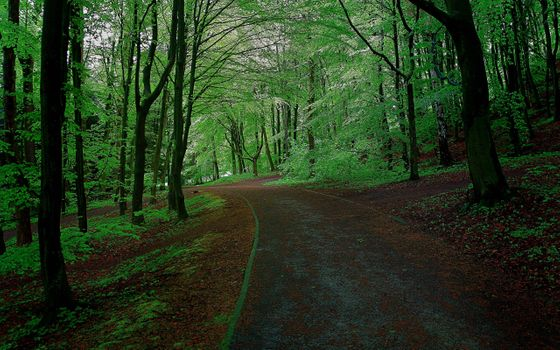 Photo free forest road, summer, greens