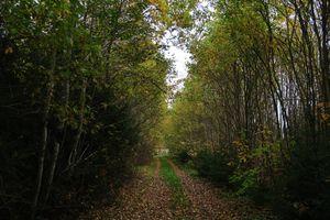 Photo free path, trees, shrubs