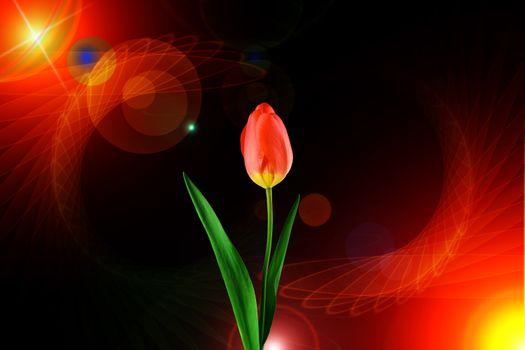 Фото бесплатно букет, тюльпаны, флора