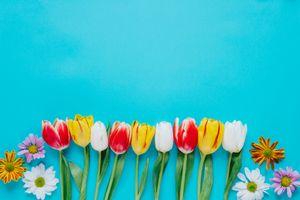 Фото бесплатно цветы, тюльпаны, голубой фон, флора