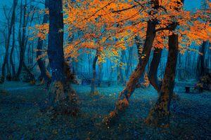 Photo free autumn, Park, sunrise