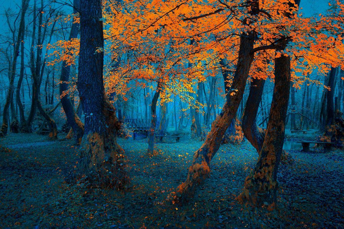 Фото бесплатно осень, парк, рассвет, деревья, лавочки, мост, пейзаж, пейзажи